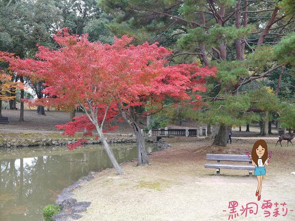 奈良公園-33.jpg
