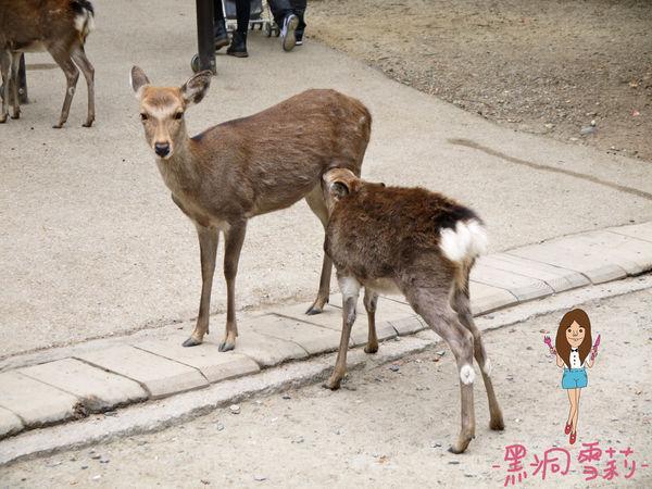 奈良公園-38.jpg