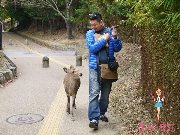奈良公園-40.jpg