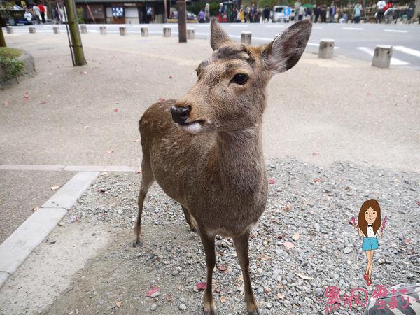 奈良公園-42.jpg