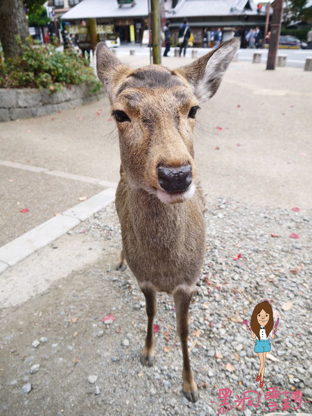 奈良公園-44.jpg