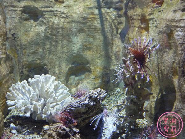 野柳海洋世界-166.jpg