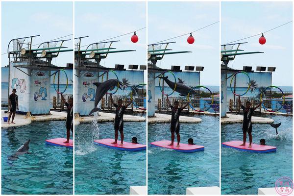 海洋世界-海豚表演.jpg