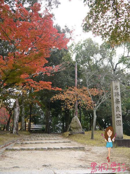 奈良公園-24.jpg