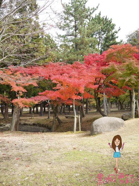 奈良公園-30.jpg