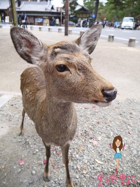 奈良公園-43.jpg