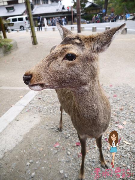 奈良公園-48.jpg