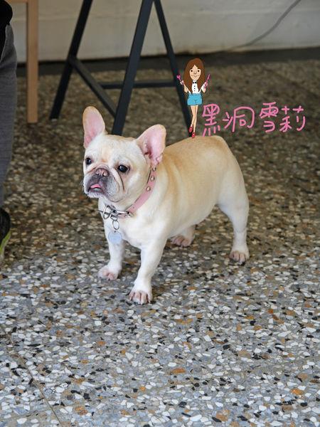 台中寵物下午茶(嗝咖啡gé cafe)-11.jpg